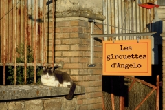 Les girouettes d'Angelo